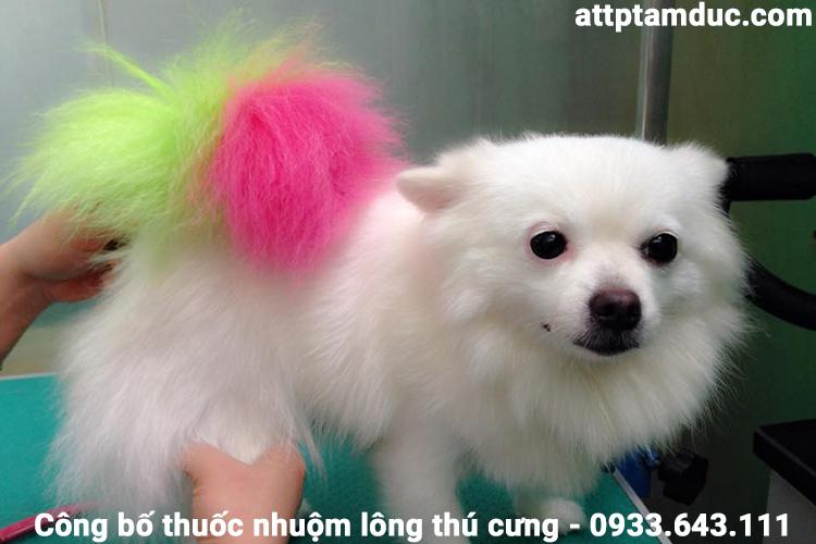 Công bố chất lượng thuốc nhuộm lông cho thú cưng