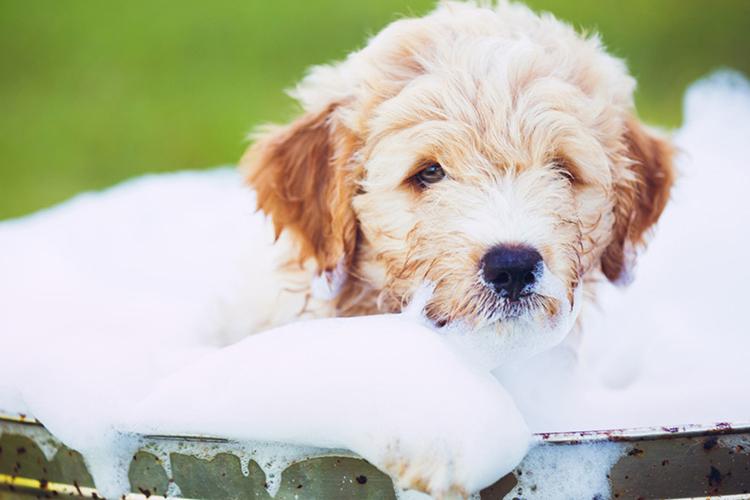 Công bố chất lượng sản phẩm sữa tắm cho thú cưng như thế nào và ở đâu?